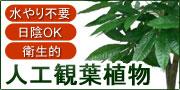 人口観葉植物