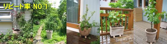 ショコラ植木鉢例