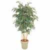 人工観葉植物 ベンジャミン 立木 5本立 1.8m (TK-GD-142)