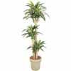 人工観葉植物 ドラセナ 幸福の木 1.7m (TK-GD-149)