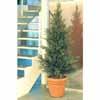 人工観葉植物 モミツリー 2.1m (TK-GD-153M)