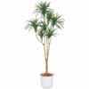 人工観葉植物 ドラセナ コンシンネ 1.6m (TK-GD-196)