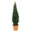 人工観葉植物 ゴールドクレスト グリーン 1.5m (TK-GD-198)