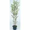 人工観葉植物 黒竹3本立 鉢付 1.8m (TK-GD-21LH)