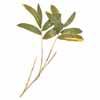 人工観葉植物 クマザサ リーフ L50cm (TK-GN-13)