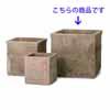 �e���A�X�g���E�J�y���L���r 50cm (YT-AS-FQ6X17E)