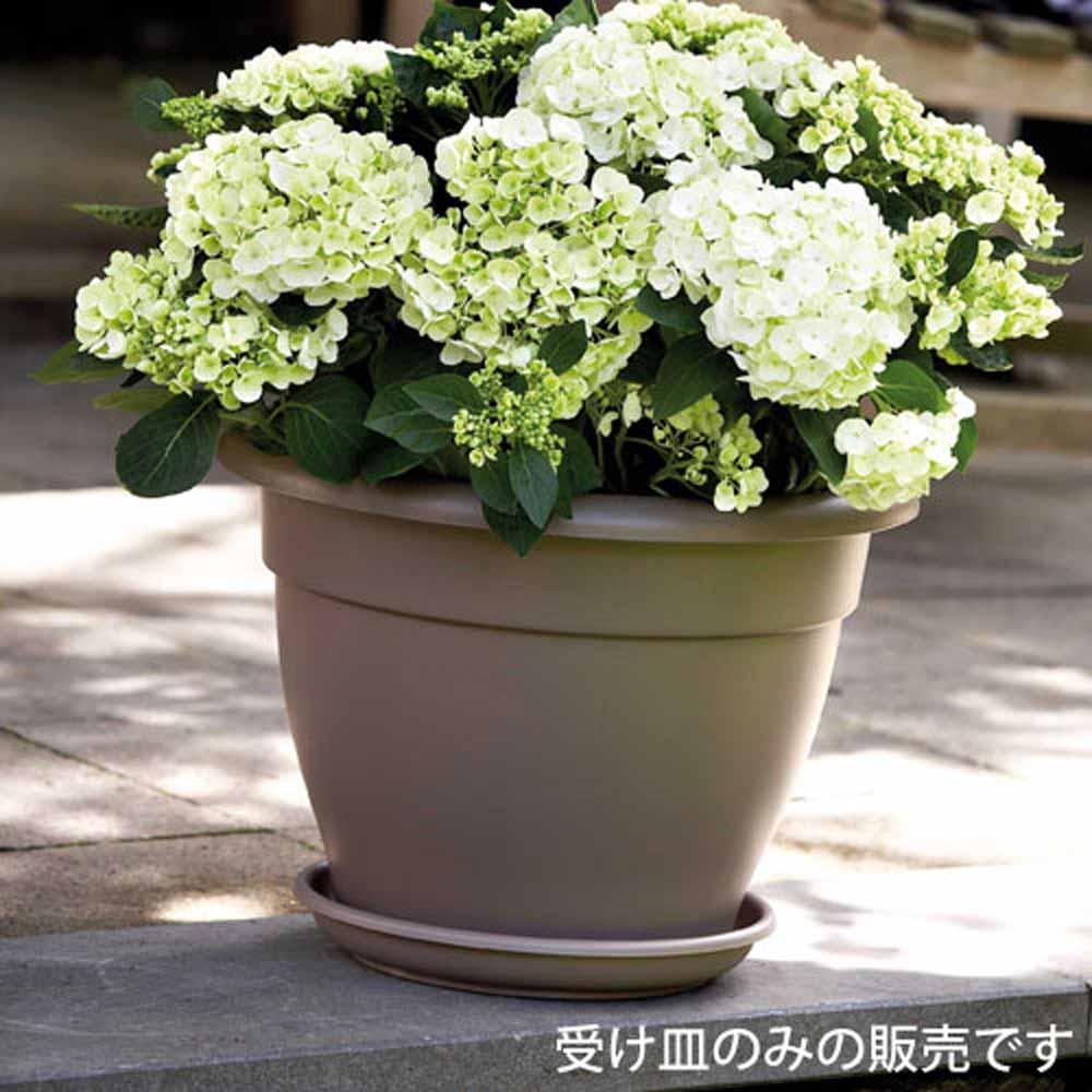 【アウトレット】ソーサー 42 (キャラメル) (OUT-E907042-CARA)
