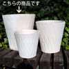 ダイヤモンド・スタンダード LW 38cm (KL-NW-81LW)