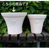 ���[�Y�E���E���h LW 39cm (KL-NW-84LW)